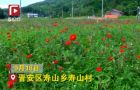 福州晋安:百日菊开,静待赏花人来