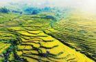 每立方1万元,竹材卖出红木价!三明吉兴竹业走出一条绿色发展之路(2)
