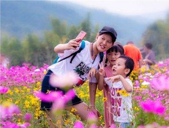 三明沙县:湿地公园花开正艳