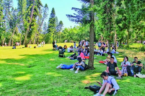 明天起厦门植物园南洋杉草坪封闭养护 封闭期间严禁人员进入草坪