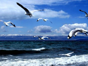 大美青海 湿地最美
