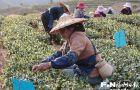 国际茶日:共品茶香茶韵 共享美好生活【组图】(7)