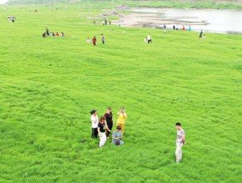 长江水位回落现草海