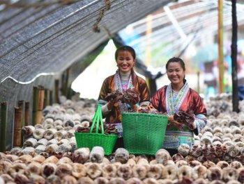发展产业助脱贫