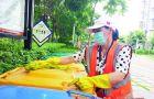 厦门海沧区:产业工人有力量 高效推动垃分工作