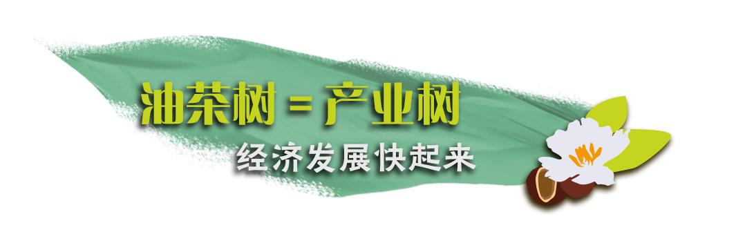 """一枝一叶总关情丨光山油茶的""""好路子""""(3)"""