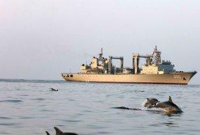 超有愛!海豚與軍艦共舞